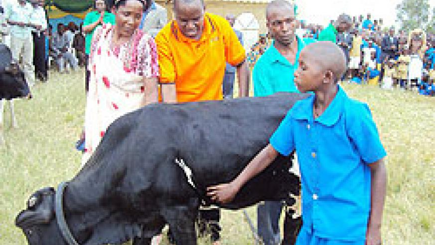 Kamonyi District Mayor Jacques Rutsinga,(C) hands over a heifer to a pupil at Kiboga Primary School. (Photo D Sabiiti)