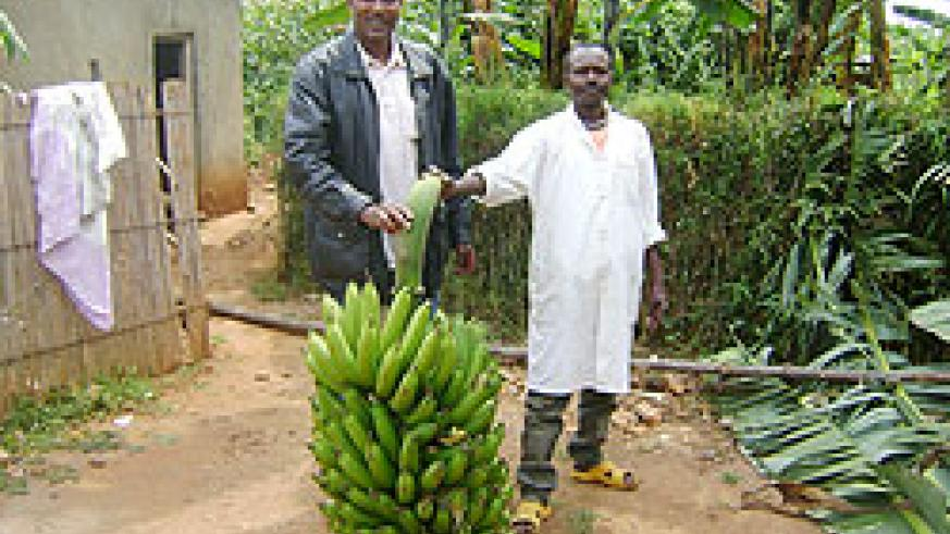 Farmers hold a giant bunch of bananas; The recent transport hike has affected food prices.