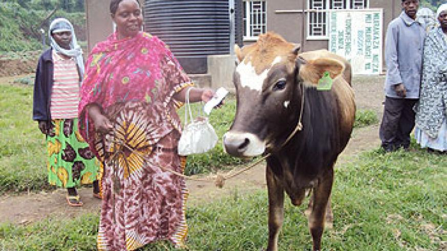 One of the beneficiaries of the Girinka project Chantal Mukabaziga receives her cow Thursday. (Photo A. Ngarambe)