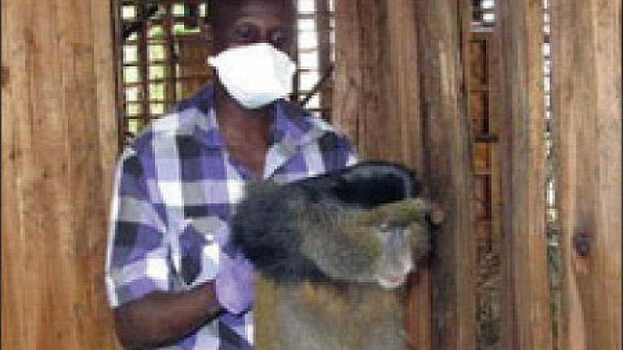 Dr. Jean-Felix carries the monkey to the dog crate.
