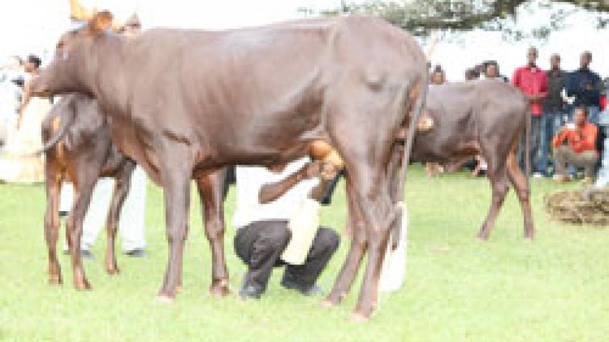 Regional farmers have been challenged to use EAC to diversify the market for their milk (File Photo)