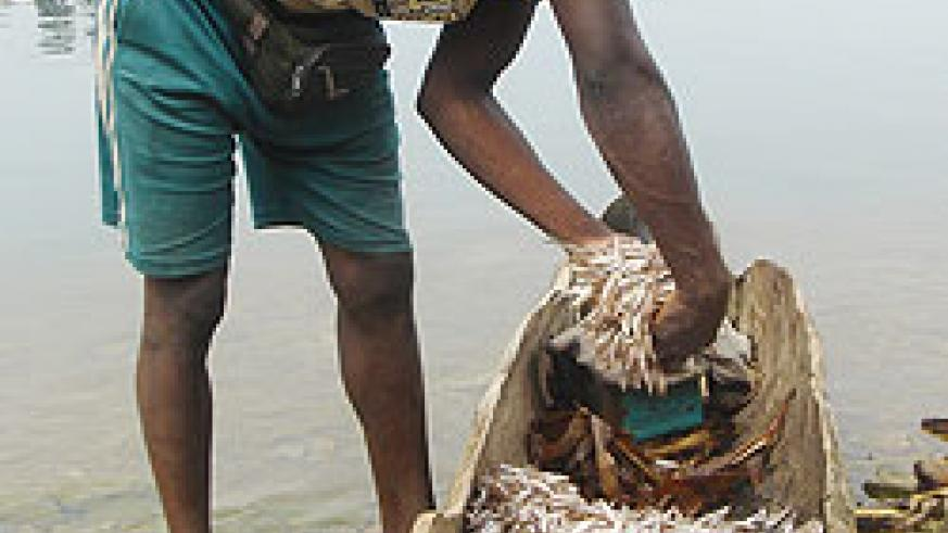 A fisherman sorts out his catch at Lake Kivu. Government targets to double fish production next year. The New Times File.