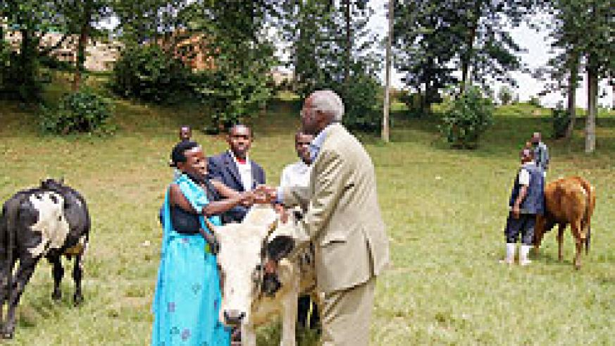 Red Cross president Bernard Nzigiye hands over  a cow to a beneficiary. Photo New Times F Ndoli