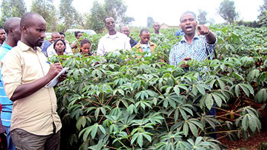 Belange Uwizeye, a cassava specialist (L) lectures agricultural officers at a cassava demonstration farm in the Eastern Province . The New Time /S. Rwembeho.