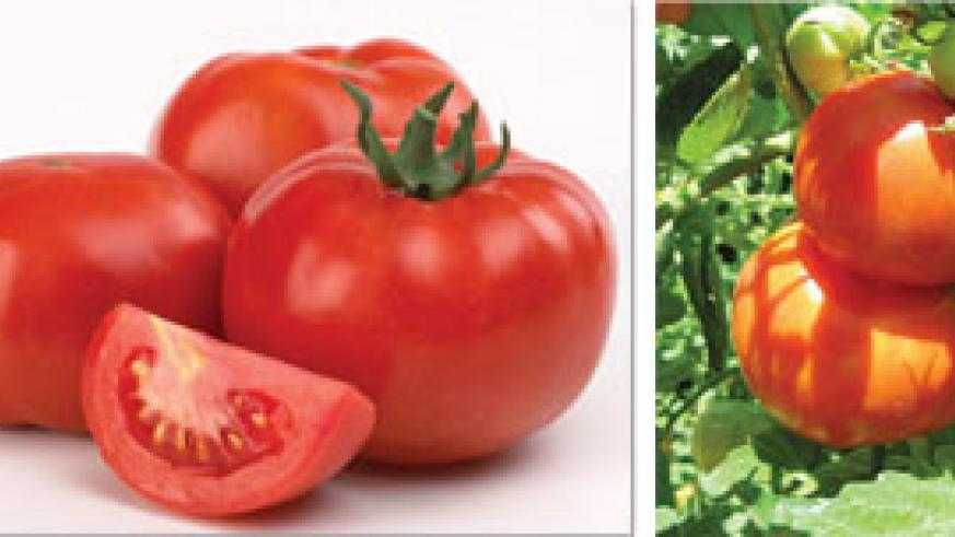 L-R:Ripe tomatoes; You can eat it fresh from the garden