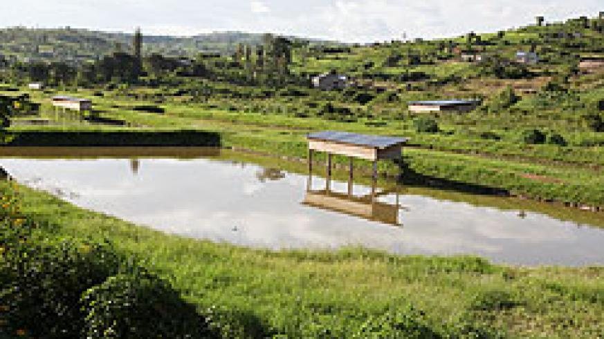 Agriculture minister Agnes Kalibata has encouraged Gatsibo District residents to take up fish farming to earn a living. The New Times  / File photo