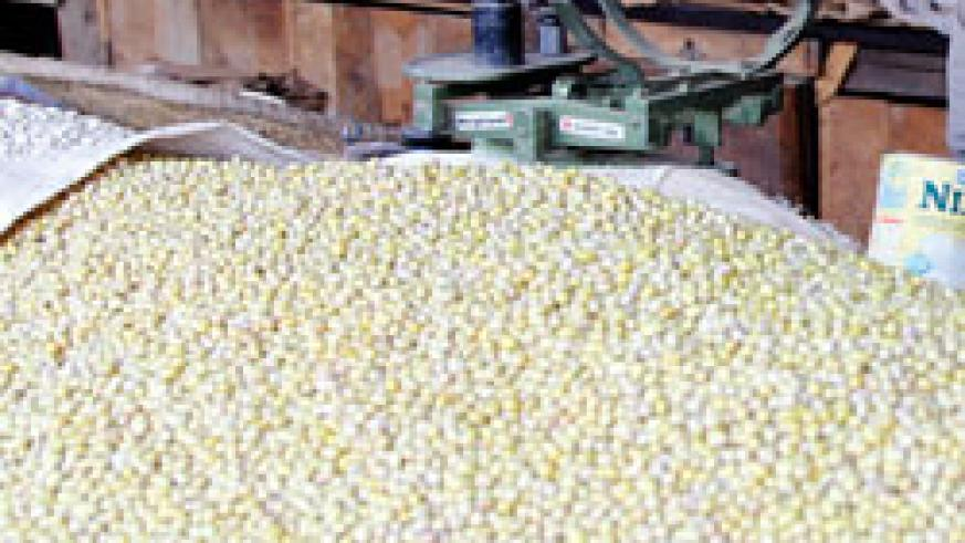 Nyabihu District has projected to increase beans production this season. The New Times /File