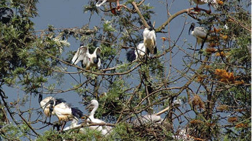 Rwanda is home to over 600 bird species. The New Times / File