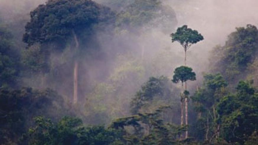 Rwanda's forest conservation policies are globally recognised. Net photo