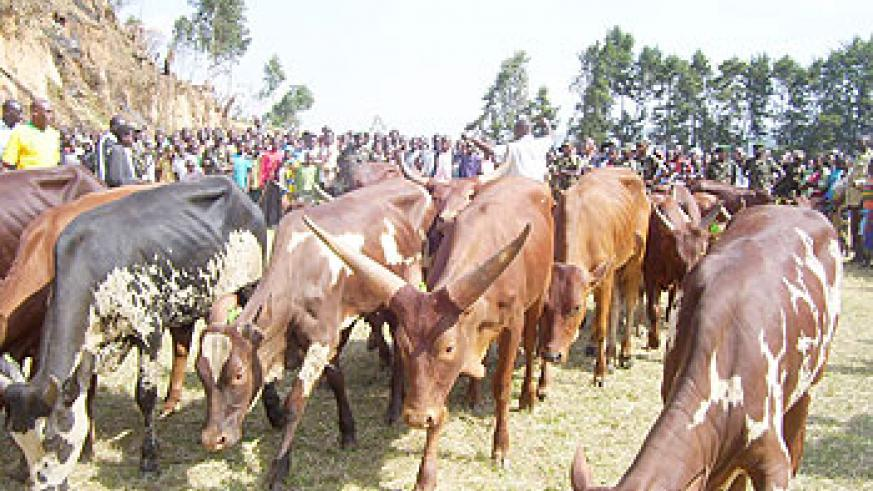 Cows have made a big difference in families. The New Times \File photo