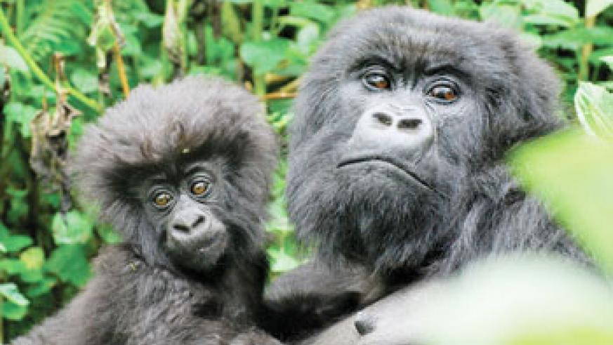 Mother and baby from the Isabukuru family group