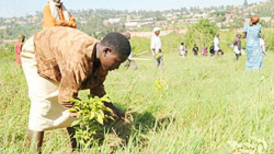 A woman plants a tree during recent tree planting exercise. Citizens must own the process, according to Natural Resources minister, Stanislas Kamanzi.