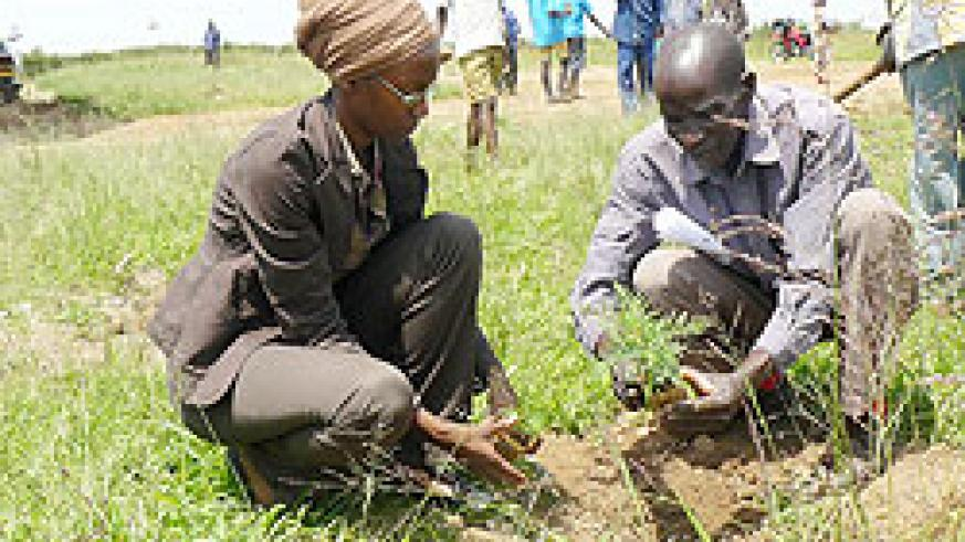 The tree planting exercise is to be intesified later this month. The New Times / File photo