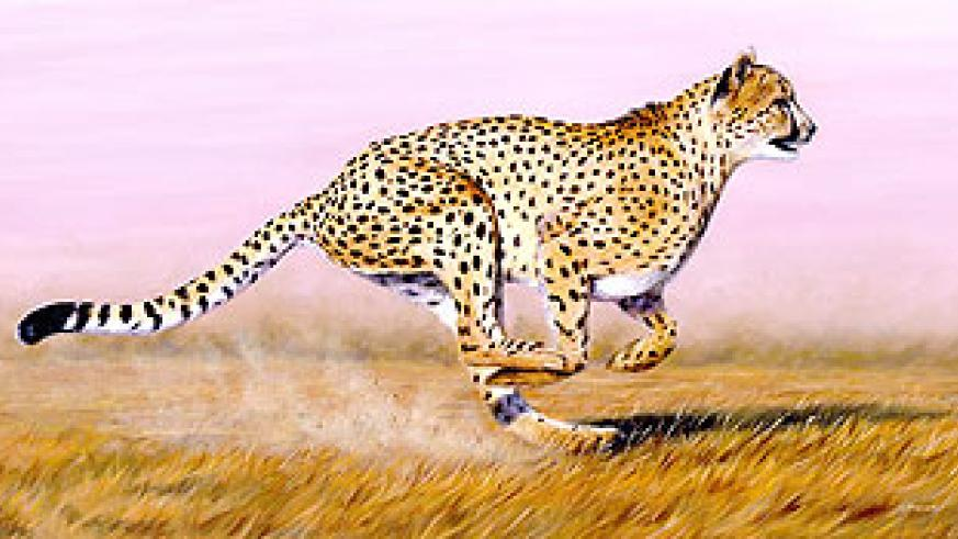 The Cheetah is the fastest land animal