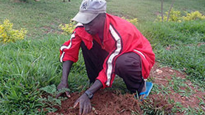 Experts have called upon government to enforce mechanisms that will see planted trees well nurtured.