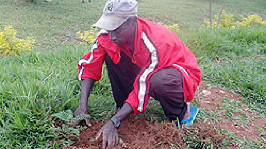 Tree planting should be embraced by all for sustainable development, according to the Senate President Dr Jean Damascene Ntawukuriryayo