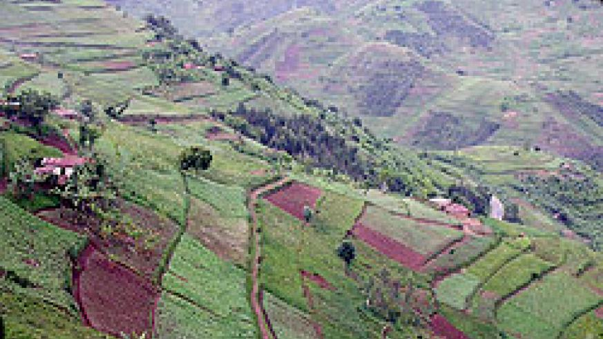 A terraced hill. Mountaineous Gicumbi district has vowed to intensify terracing