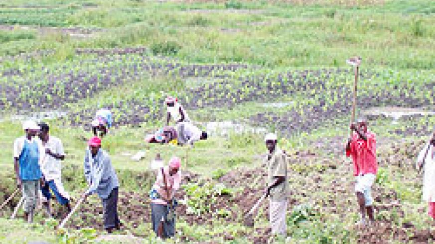 Farmers cultivating on a farm under land consolidation programme. The New Times / File.