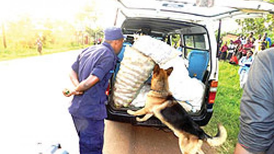 A sniffer dog searches a taxi as a police officer closely observes in Kayonza . Police have launched a massive campaign against drug trafficking countrywide. The New Times / S. Rwembeho.