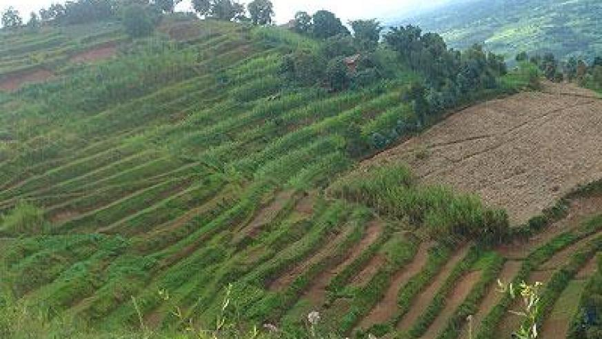 Terraced land under utilisation. Farmers in Kicukiro are gaining from land consolidation. The Sunday Times / File