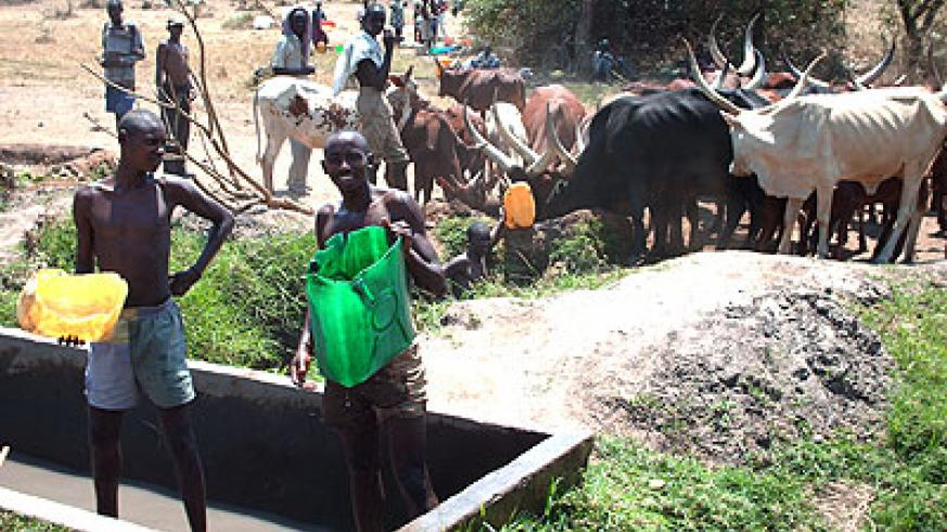 Herdsmen watering cattle in Nyagatare District. The New Times / File.