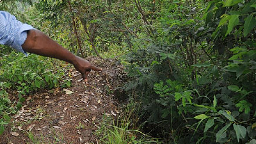 A man points to a thicket where the body of the late Dr. Radjabu Mbukani was found.  The New Times / John Mbanda