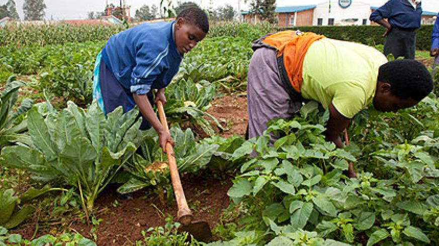 Jacquelline Uwizeyimana, a 20-year old visually impaired woman from Rulindo (L) tills the vegetable garden at Masaka School of the Blind together with her colleague  Judithe Nyiranshimiyimana,   25, from Bugesera. The school that started operating in 1994, offers a six-month certificate that among other disciplines, teaches  students how to read, write, farming. The New Times  / Timothy Kisambira