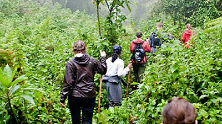 Tourists tracking Gorillas: Tour operators and hoteliers are facing hard times. The New Times / File.