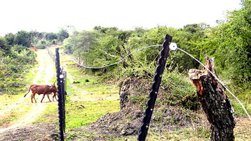 Part of the Akagera National Park that was fenced to cut off stray wild animals from human settlements.   The New Times/  File.