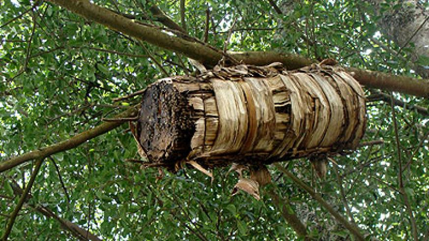 A traditional beehive hangs on tree branches. The New Times/ File.