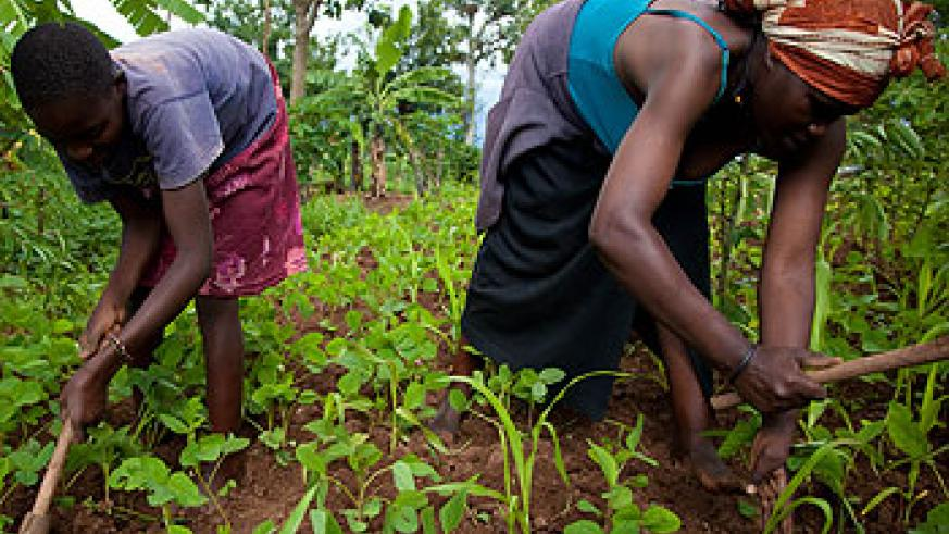 A mother tills her land together with her daughter. Soon the rural poor will be considered customary land occupants. The New Times/Timothy Kisambira.