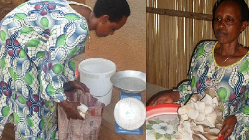 Mbabazi packages some of the mushrooms as she prepares to take them to the market.Mbabazi cleans the mushrooms.  The New Times / Triphomus Muyagu