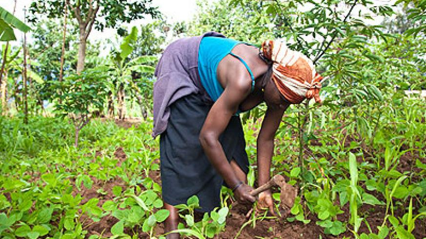 A woman cultivates land. The World Bank has urged African governments to improve land management as foreigners scramble for the continent's resource. The New Times/File