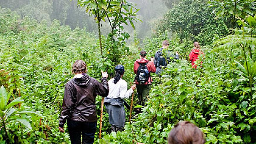 Tourists trekking Nyungwe Park . The New Times/ File.