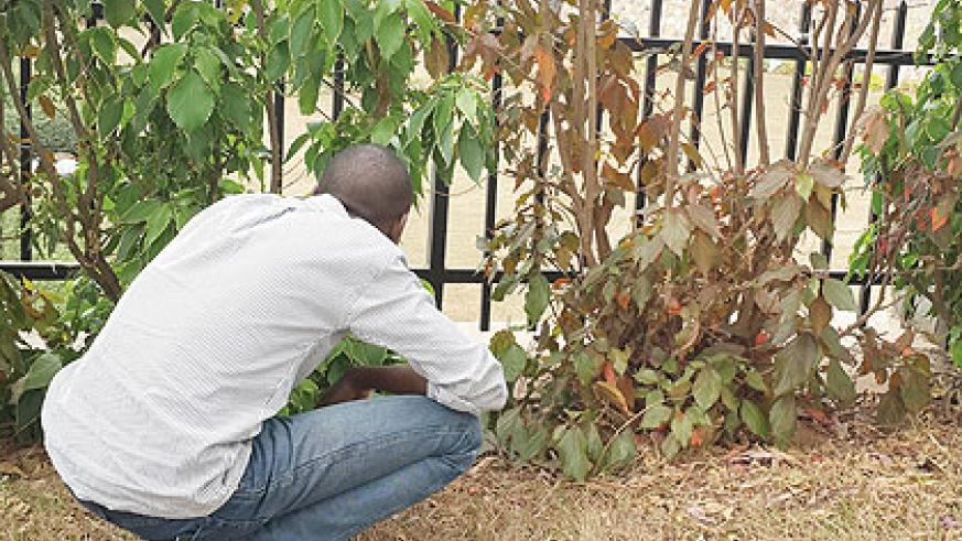 Because of strict dating rules, some guys are forced to come around the girl's place like thieves. The New Times/Patrick Buchana