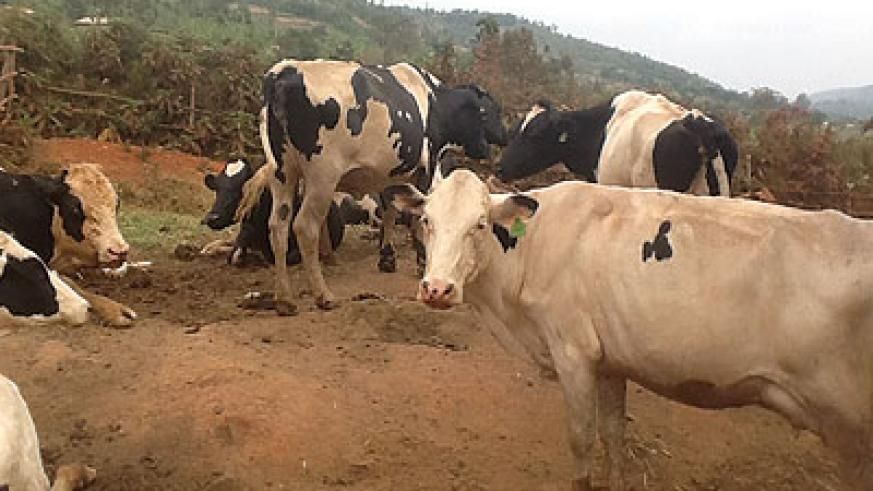 18 Tips to Become Dairy Farming Consultant in Nigeria