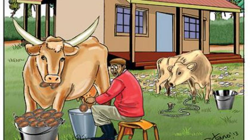 Farmers say a litre of milk costs Rwf100, which they argue is too little compared to what they spend on taking care of the animals, let alone facilitating them to provide for their families.