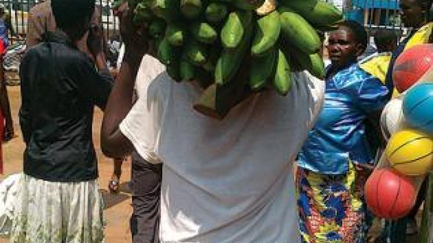 Government has unveiled a new plan to increase banana production in the country. The New Times / Peterson Tumwebaze