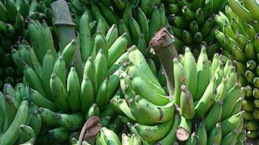 Banana lovers will have to dig deeper into their pockets to afford a meal.  The New Times / File photo