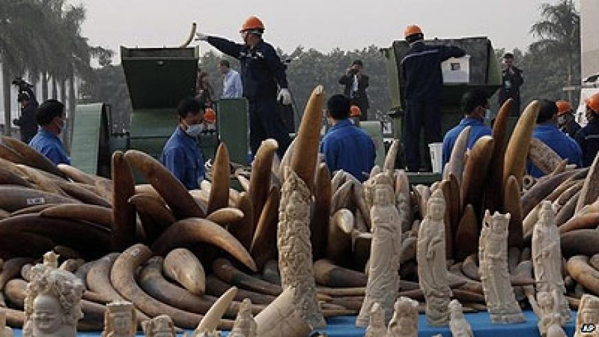 This was the first time for China to destroy ivory.