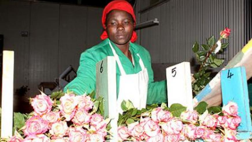 A salesperson arranges flowers at an exhibition. Growing cut roses is one of the 'quick-win' projects government is promoting to reduce the huge trade imbalance Rwanda faces an....