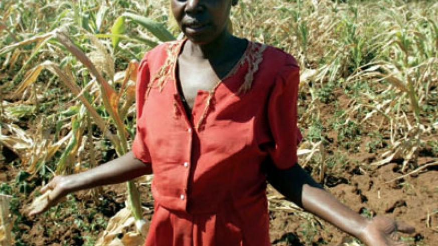 A farmer's dispair. Climate change has in the past few years had devastating effects on agriculture in Africa. Net photo.