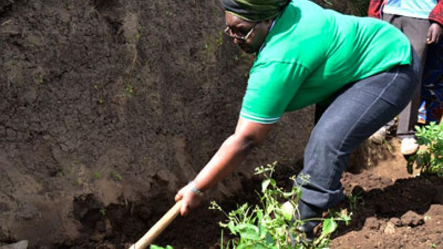Leading by example: Minister for Disaster Managment and Refugees Seraphine Mukantabana, joined residents to dig terraces during the launch of the climate adaptation project on Monday. Jean d'Amour Mbonyinshuti.