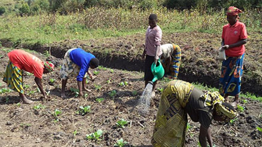 Farmers irrigate their gardens. Irrigation farming has helped reduce the dangers associated with relying on natural factors. File.