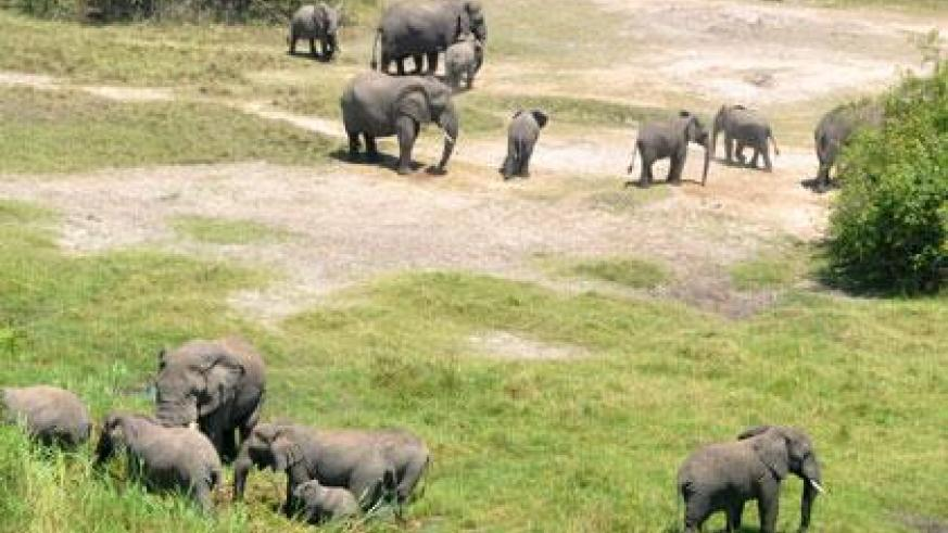 An aerial view of the elephants at Akagera National Park. (Allan Brian Ssenyonga)