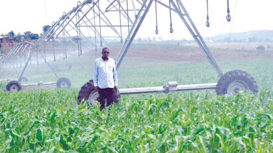 A farmer checks his maize field. Embracing irrigation is one of the ways that could greatly boost crop output. (File)