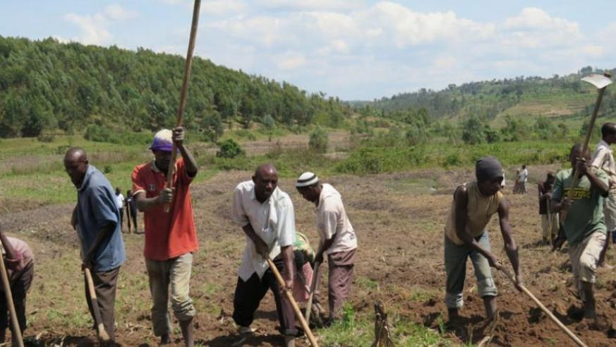 Farmers in Nyanza till their land recently. The changing weather patterns have made it diffucult for smallholder farmers to know the exact time of planting and harvesting. (Jean Pierre Bucyensenge)