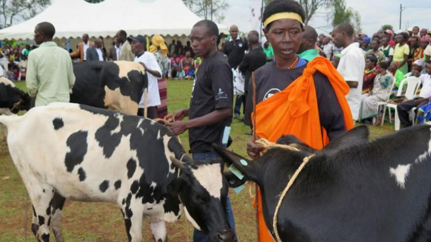 Some of the beneficiaries with their cows during the launch of the Girinka Week in Kansi Sector, Gisagara District yesterday. (jean Pierre Bucyensenge)