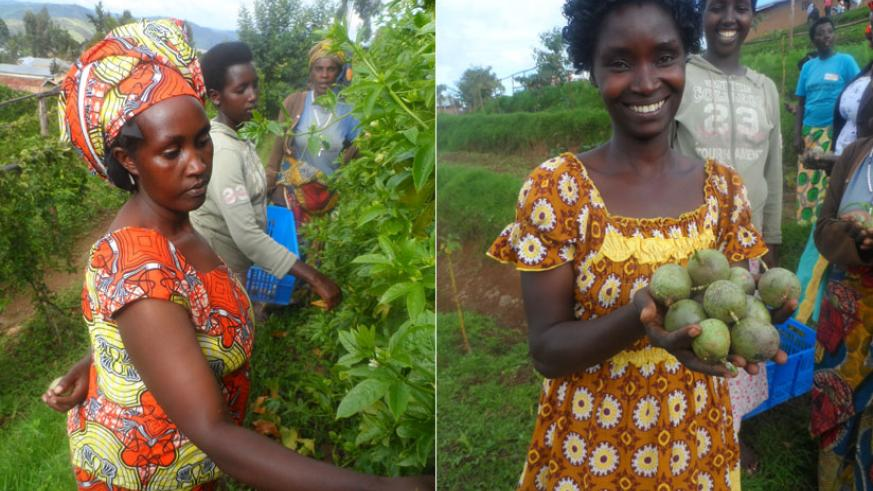 Left: Women harvesting in the farm. Right: Sifa Maritine with some fresh fruits. (Moses Opobo)