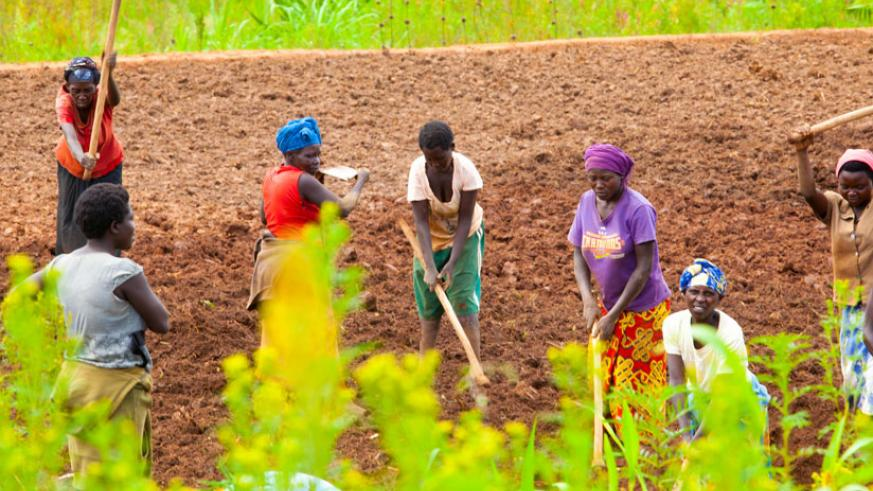 Farmers in Ruryaraya, Rwamagana District. Proper use of agrochemicals will ensure high output. (Timothy Kisambira)